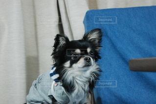 犬の写真・画像素材[2917997]
