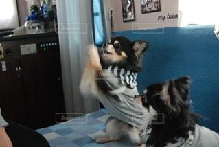 犬の写真・画像素材[2918057]