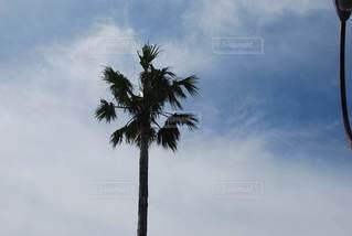 木の写真・画像素材[2927181]