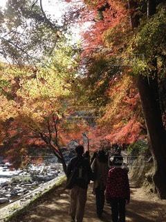 秋の写真・画像素材[110000]