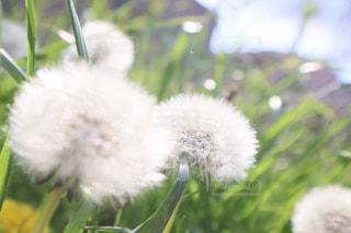 春の訪れの写真・画像素材[3154718]