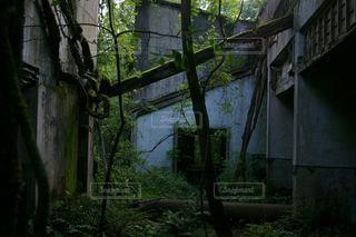 木が生い茂る廃墟の写真・画像素材[2859924]