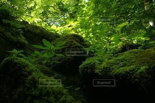 苔と新緑の写真・画像素材[2862742]