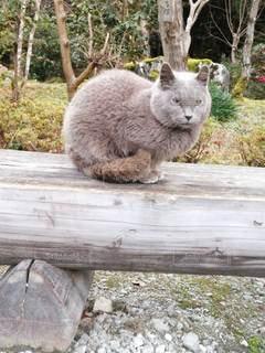 ベンチの上に猫の写真・画像素材[2894537]