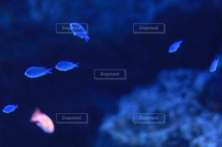 魚の写真・画像素材[2879359]