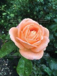 花の写真・画像素材[122053]