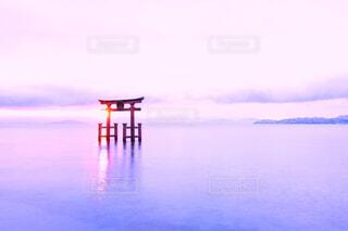 幻想的な朝…♡♡の写真・画像素材[4416077]
