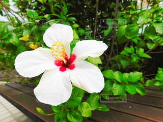 植物の上の白い花の写真・画像素材[2858553]