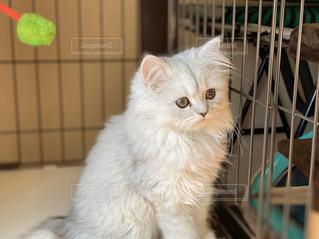 美人な子猫の写真・画像素材[2865397]
