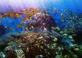 サンゴの水中図の写真・画像素材[2860668]