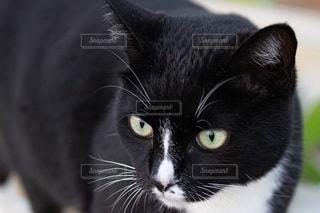 猫をクローズアップするの写真・画像素材[2860703]
