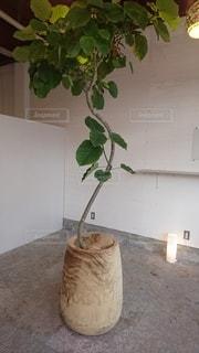 観葉植物の花瓶の写真・画像素材[2862670]
