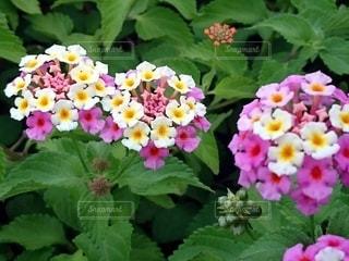 花のクローズアップの写真・画像素材[3388878]