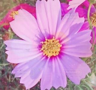 花のクローズアップの写真・画像素材[3396230]