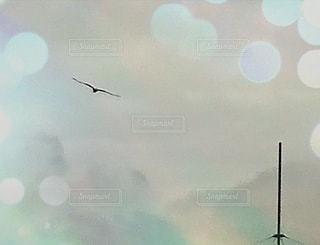 空を飛んでいる鳥の写真・画像素材[3413811]