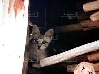 小屋の中の子猫の写真・画像素材[3417349]