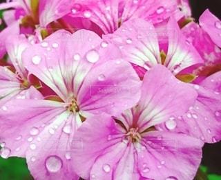 花のクローズアップの写真・画像素材[3504848]