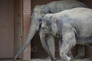 親子象の写真・画像素材[2881304]