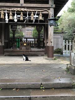 猫神社の写真・画像素材[2863223]