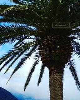 ヤシの木の写真・画像素材[2873871]