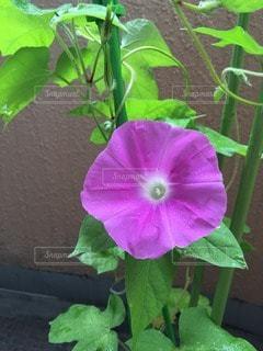 花の写真・画像素材[110153]