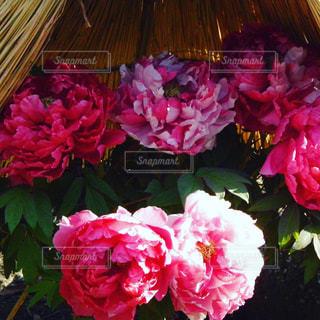 花をクローズアップするの写真・画像素材[2871882]