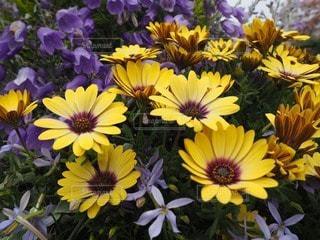 花の写真・画像素材[111464]