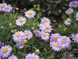 花の写真・画像素材[111467]