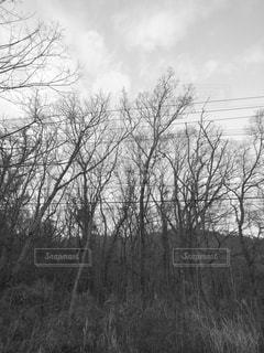 雑木林と電線の写真・画像素材[2877853]