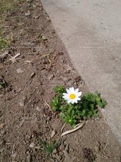 コンクリートと草花の写真・画像素材[3054812]