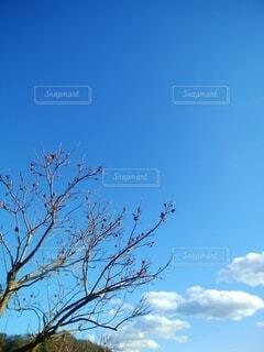 冬の柿の写真・画像素材[4021211]