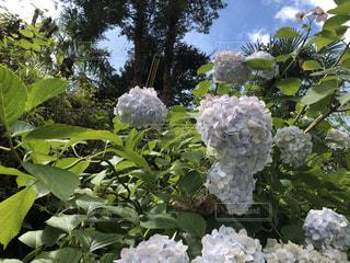花畑のクローズアップの写真・画像素材[2866691]