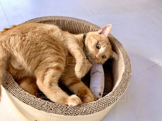 ボウルに座っている猫の写真・画像素材[2867325]