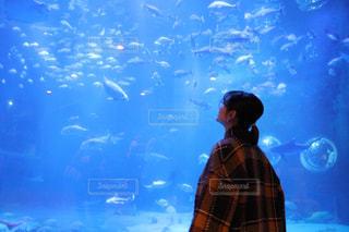 大水槽に見惚れる彼女の写真・画像素材[2867912]