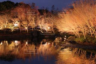 鏡面となった池の写真・画像素材[2911295]