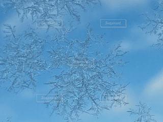 雪の結晶のズーム写真の写真・画像素材[2930823]