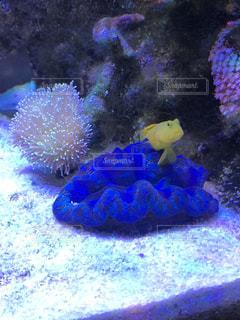 サンゴの水中図の写真・画像素材[2880932]