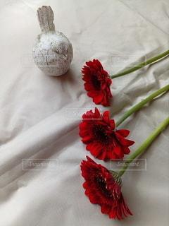 花をクローズアップするの写真・画像素材[2874751]