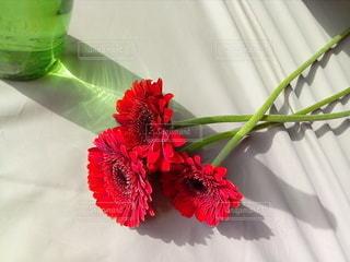 テーブルの上の花瓶の写真・画像素材[2874754]