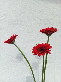 花をクローズアップするの写真・画像素材[2874760]