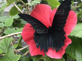 花にとまる蝶々の写真・画像素材[2869561]