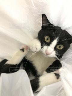 ベッドに横たわっている黒と白の猫の写真・画像素材[2870963]