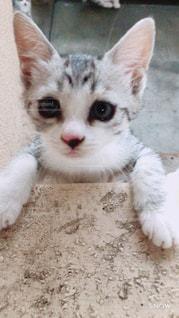 地面に横たわっている猫のクローズアップの写真・画像素材[2871266]