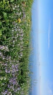花畑のクローズアップの写真・画像素材[2872690]