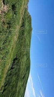 緑豊かな丘の上に立つ羊の群れの写真・画像素材[2872750]