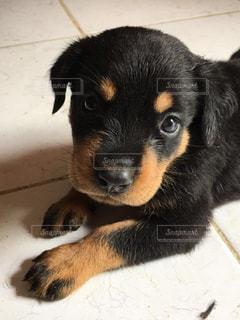 子犬の写真・画像素材[2876608]