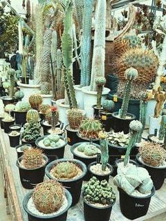植物の写真・画像素材[2881288]