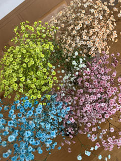 花のクローズアップの写真・画像素材[2927709]