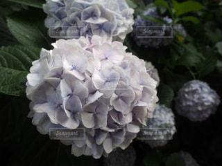 花の写真・画像素材[123729]