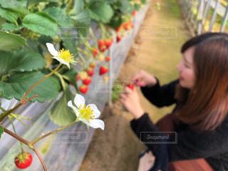 花を持っている人の写真・画像素材[2944809]
